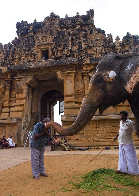 Viaje Sur de la India