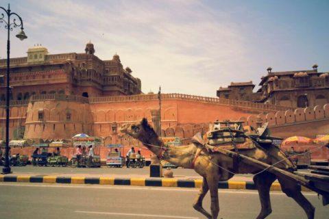 Feria de camellos