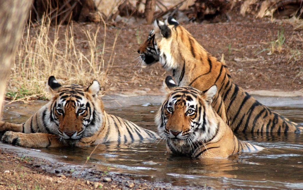 los mejores parques nacionales de la india