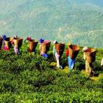 Viajes a Assam y turismo en Assam