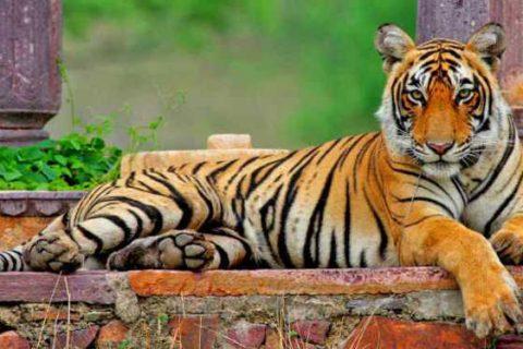 Lugares que visitar en Bharatpur