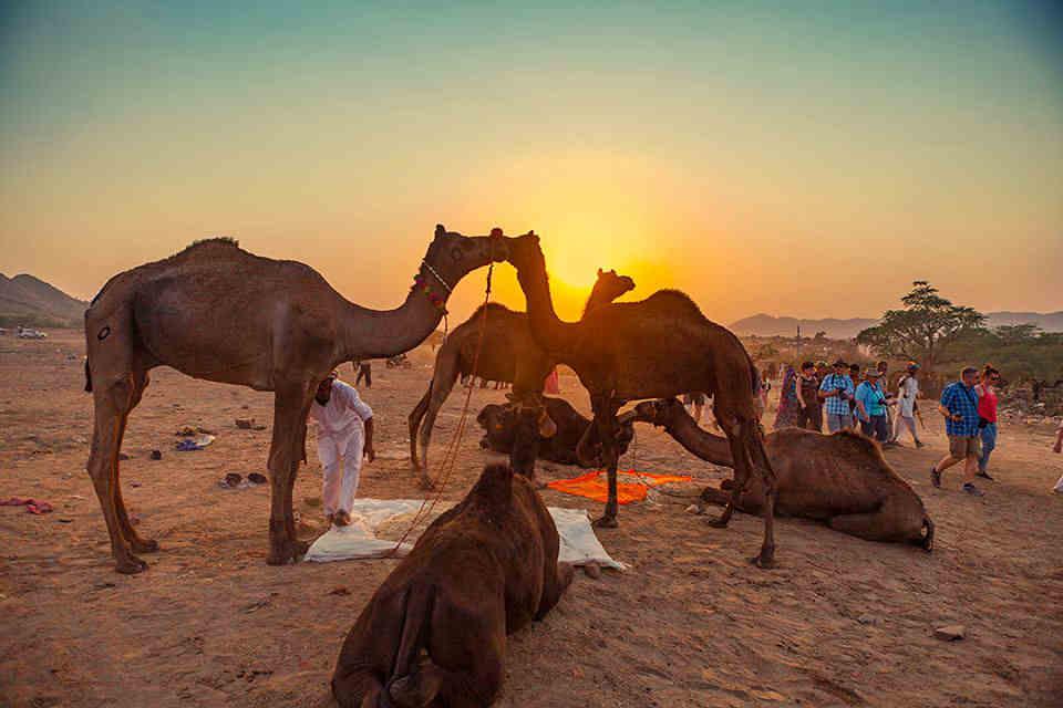 Feria de Pushkar
