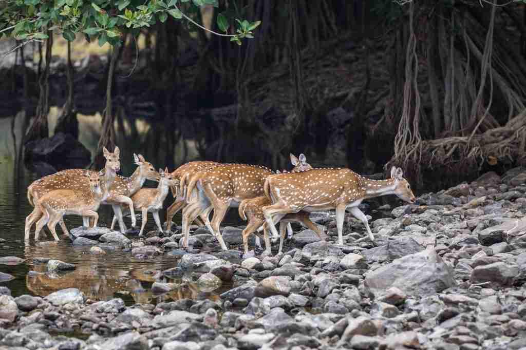 Mejores Animales para ver en India