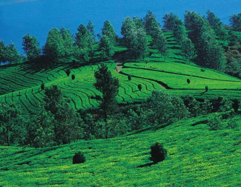 Razones para visitar Kerala en invierno